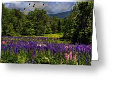 Geese Over Lupine Field Greeting Card