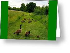 Geese Walk Greeting Card
