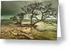 Geiger Key Shoreline Greeting Card