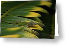 Gekco On Palm  Leaf Greeting Card