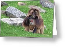 Gelada Baboon Greeting Card
