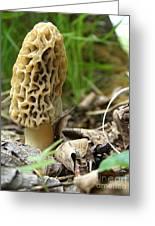 Gem Of The Forest - Morel Mushroom Greeting Card