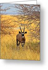 Gemsbok Standoff Greeting Card