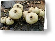 Gem-studded Puffball Mushroom Greeting Card