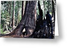 General Grant Grove Sequoia Window Greeting Card