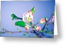 Gentle Apple Tree Flowers Greeting Card
