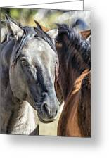 Gentle Face Of A Wild Horse Greeting Card