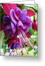 Gentle Fuschia Greeting Card by Jeff Breiman