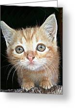 Gentle Ginger Greeting Card