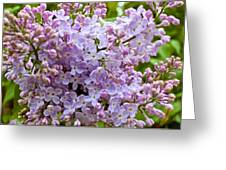Gentle Purples Greeting Card