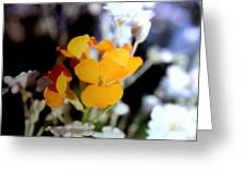 Gentle Yellow And White Greeting Card