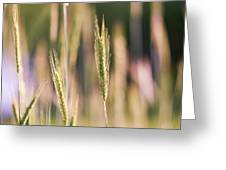 Gently Swaying Greeting Card