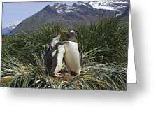 Gentoo Penguin And Young Chicks Greeting Card by Suzi Eszterhas
