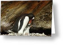 Gentoo Penguin Feeding Chicks Greeting Card