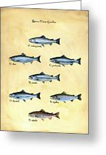 Genus Oncorhynchus Greeting Card