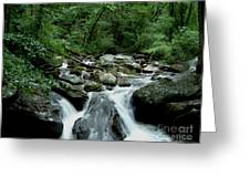 Georgia Mountian Stream Greeting Card