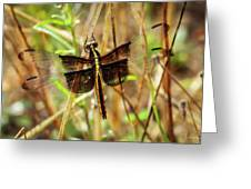 Georgia On My Mind Ray Charles Dragonfly Art Greeting Card