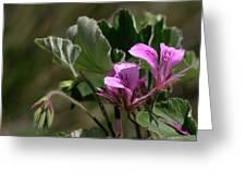 Geranium Blossom Greeting Card