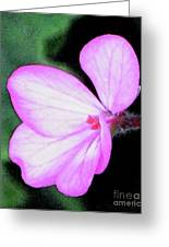 Geranium Blossom Greeting Card