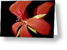 Geranium Flower Greeting Card