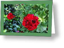Geranium Flower - Red Greeting Card