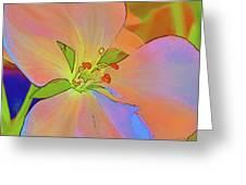 Geranium In Color Greeting Card
