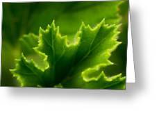 Geranium Leaf Greeting Card