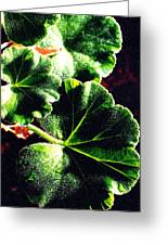 Geranium Leaves Greeting Card