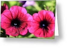 Geranium Pair Greeting Card
