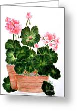 Geraniums In Clay Pots Greeting Card