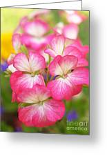 Geraniums On A Brilliant Summer Day Greeting Card