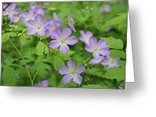 Geraniums Spring Wildflowers Greeting Card