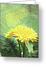 Gerber Daisy And Reflection Greeting Card