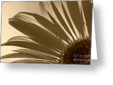 Gerber Flower Greeting Card