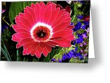 Gerbera Bella Greeting Card