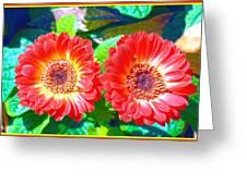 Gerbera Couple Greeting Card
