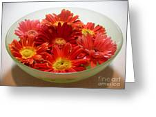 Gerbera Daisies - A Bowl Full Greeting Card