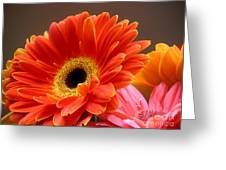 Gerbera Daisies - Luminous Greeting Card