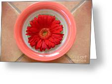Gerbera Daisy - Bowled On Tile Greeting Card