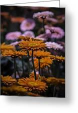 Gerbera Daisy Garden Greeting Card