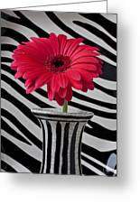 Gerbera Daisy In Striped Vase Greeting Card