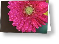 Gerbera Fresh Greeting Card