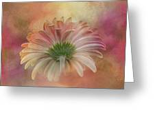 Gerbera From The Back Greeting Card