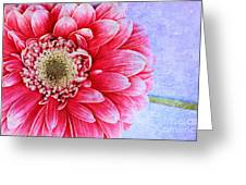 Gerbera Texture Greeting Card