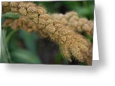German Millet Greeting Card