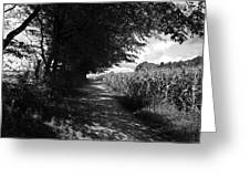 German Path Black And White Greeting Card by Edward Myers