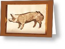 German Pietrain Boar 31 Greeting Card
