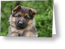 German Shepherd Puppy IIi Greeting Card by Sandy Keeton
