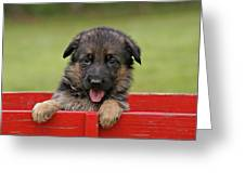 German Shepherd Puppy In A Wagon Greeting Card