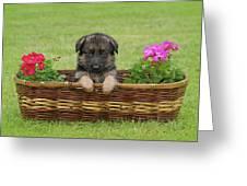 German Shepherd Puppy In Basket Greeting Card by Sandy Keeton
